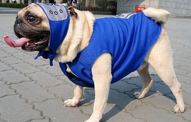 cosplay naruto dog