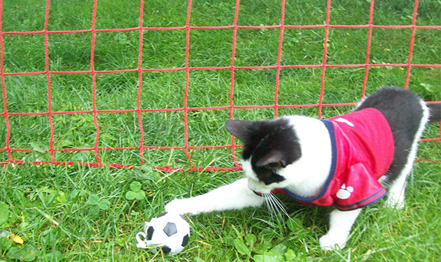 gato-futbol