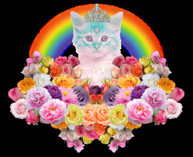 gatos lsd 04
