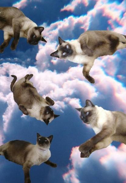 gatos lsd 06