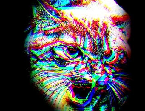 gatos lsd 11