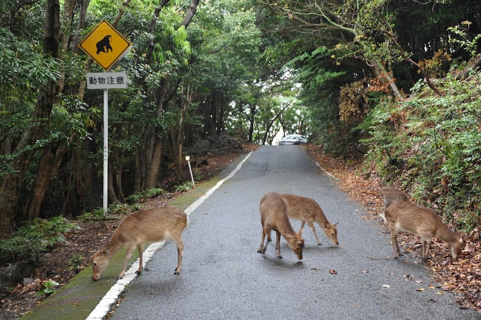 look japan yakushima foto 13