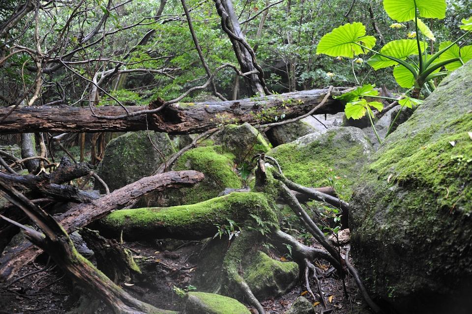 look japan yakushima foto 2