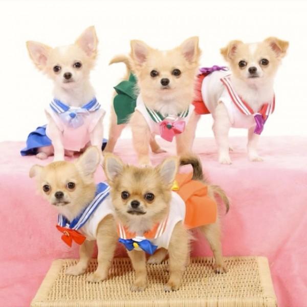 Sailor-moon-dog-cosplay-00