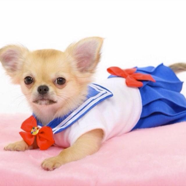 Sailor-moon-dog-cosplay-02