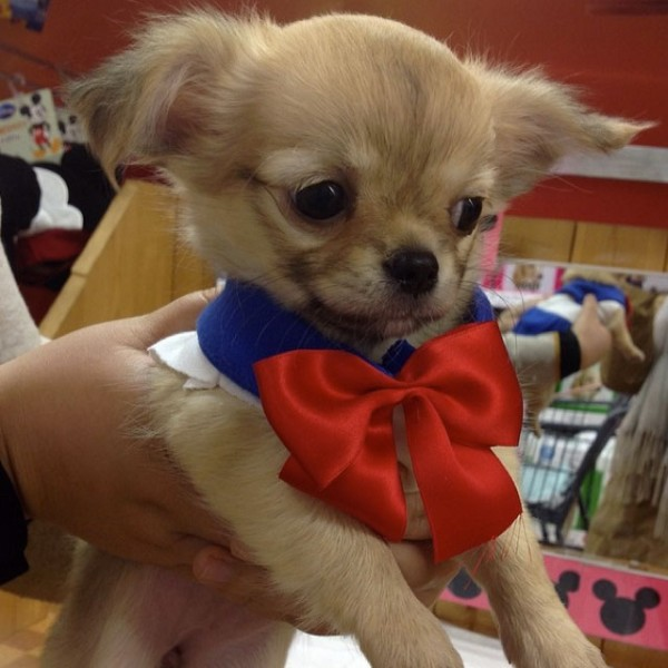 Sailor-moon-dog-cosplay-08
