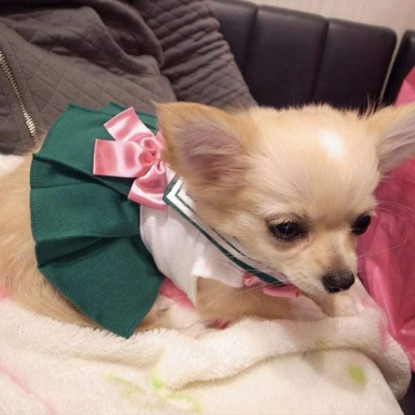 Sailor-moon-dog-cosplay-09