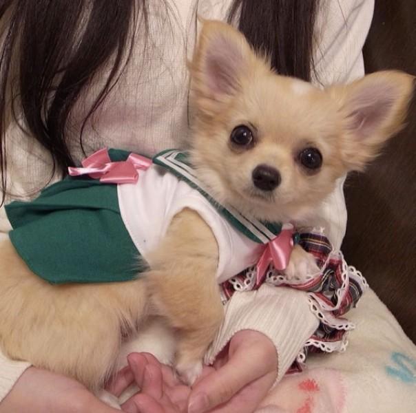 Sailor-moon-dog-cosplay-13