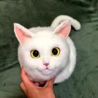 bolsos gatos 6