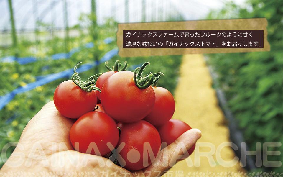 Gainax tomates