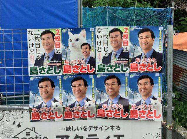 gato electoral 2