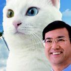 gato electoral